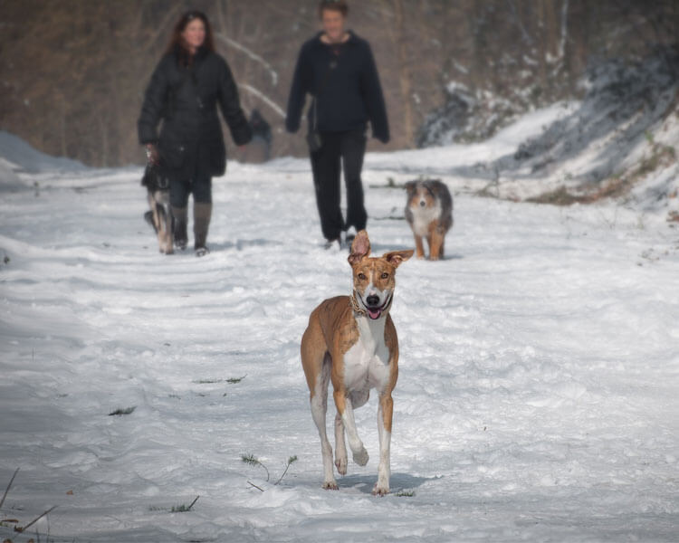 dog runs with a couple in its back