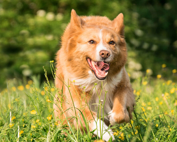 dog spending more time on outdoor activities