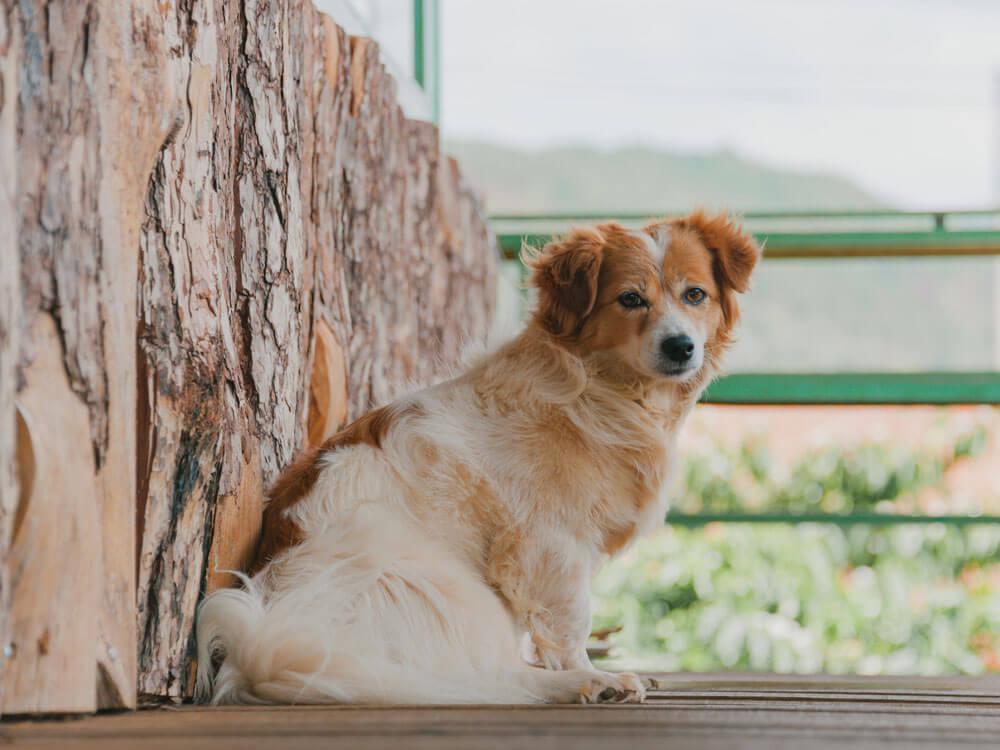 a dog sitting near a bench