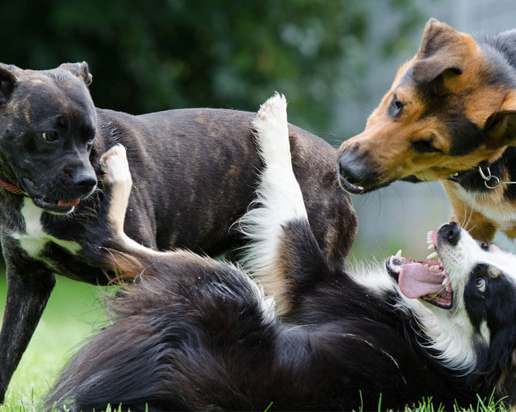 three dogs playing at the grass