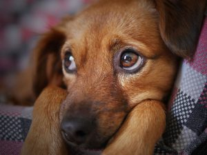 Can Dry Eye in Dogs Be Cured?