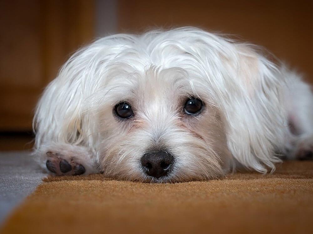 emergency vet for pets