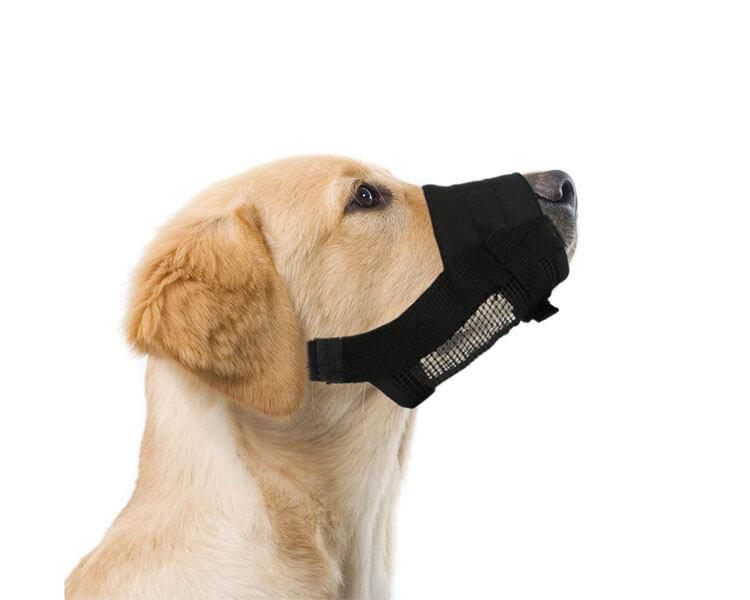 dog muzzle - 2
