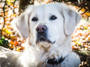Leptospirosis in Dogs: Prevention and Treatments