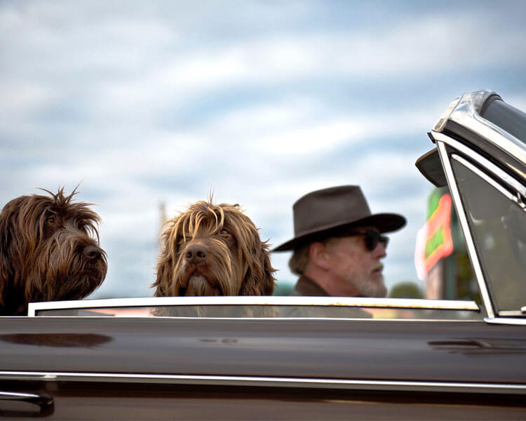 an old man driving together with his two dogs