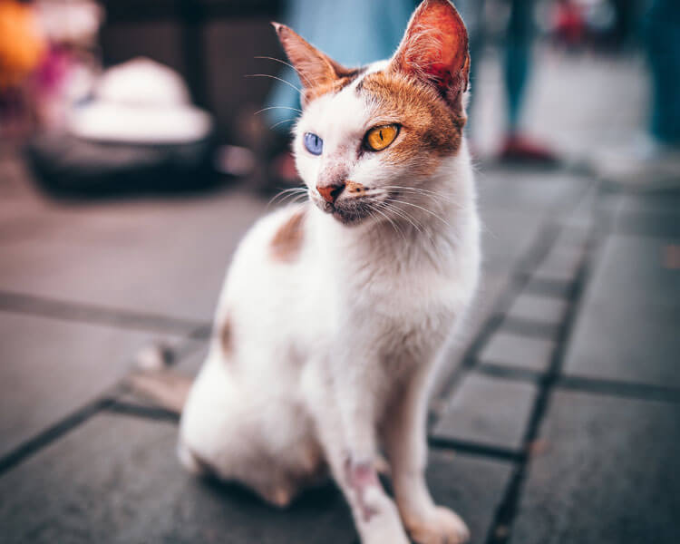 a cat with poor hygiene sitting on the ground