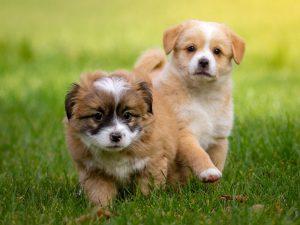 Puppy Socialisation Checklist