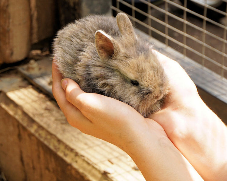 a small rabbit in its owner's hands