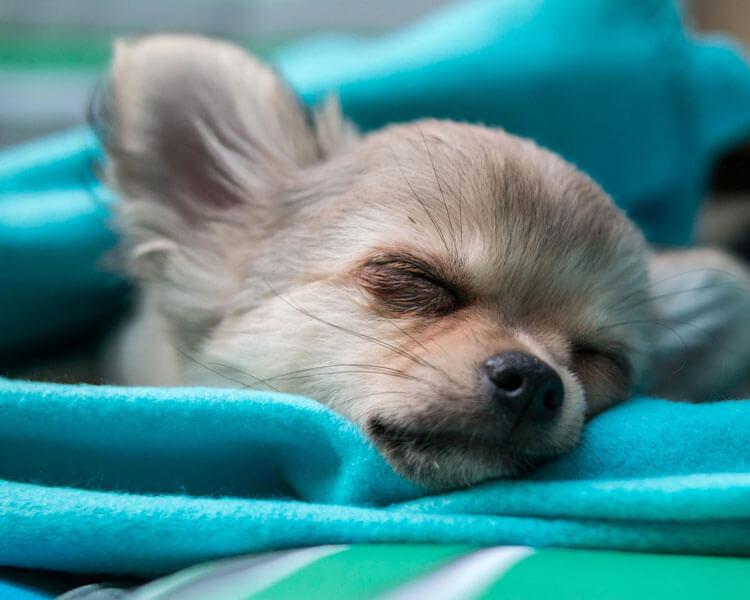 sick dog sleeping