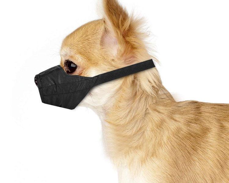 dog muzzle - 4