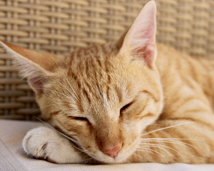 sick cat sleeping
