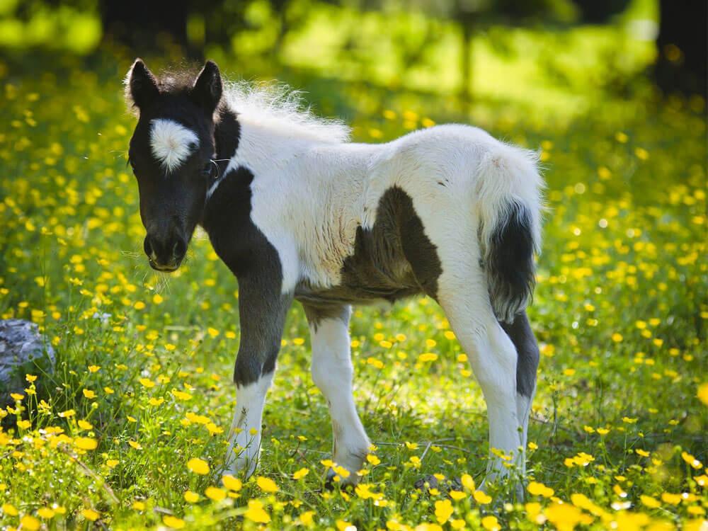 top horse breeds