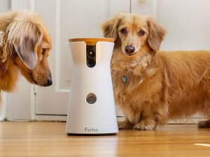 Your Digital Dog Sitter - Furbo Dog Camera