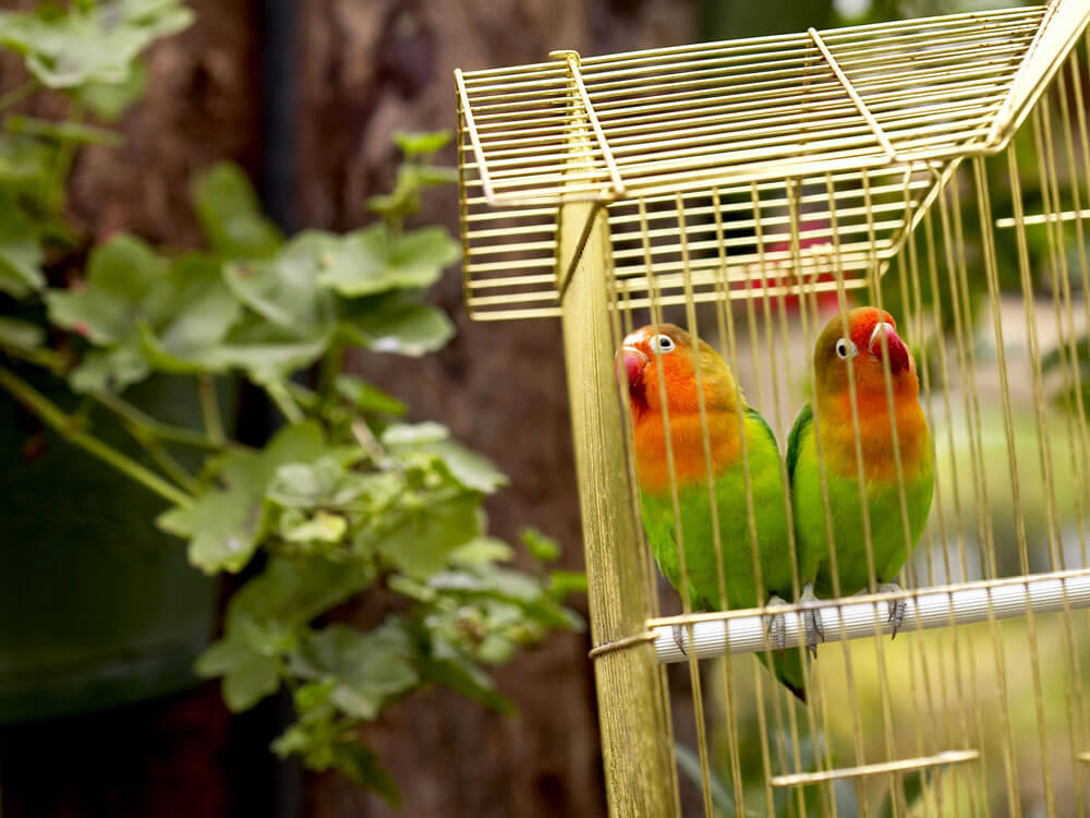 two birds inside a cage