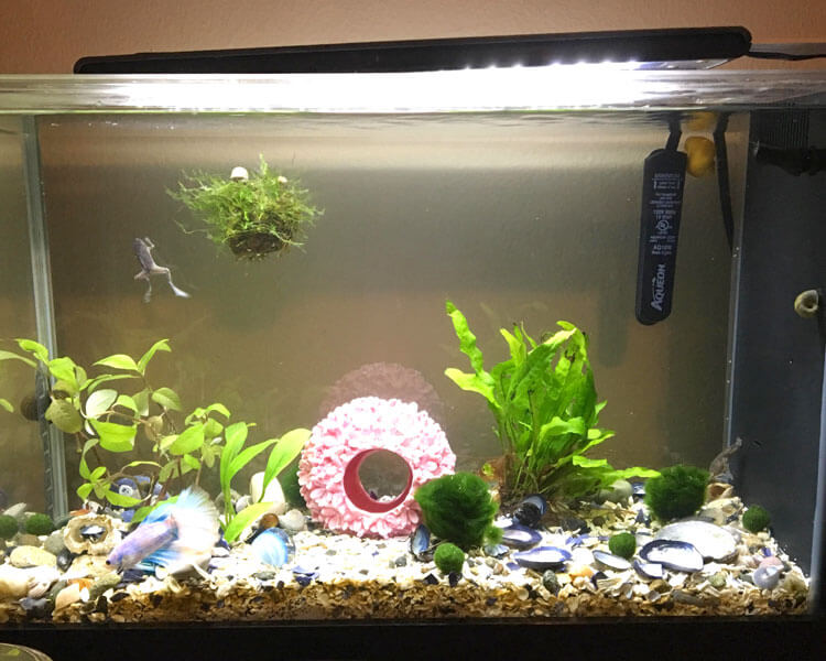 an aquatic tank for frogs