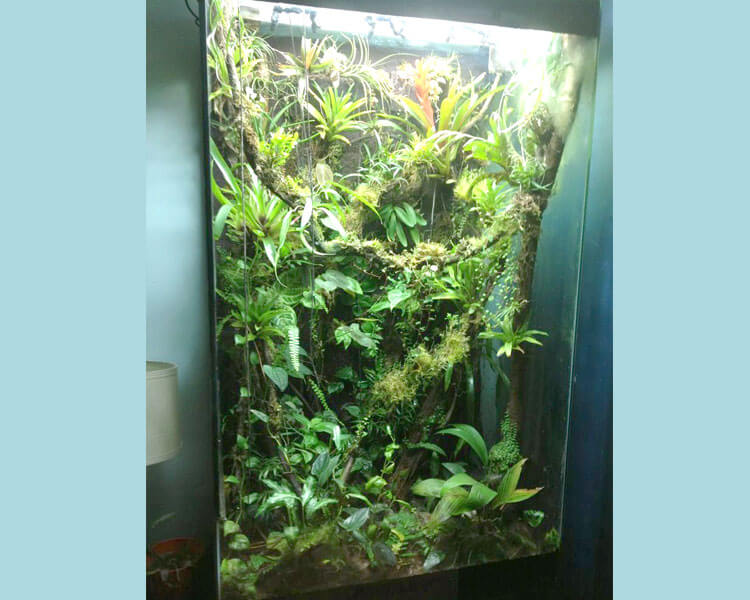 an arboreal tank for frogs