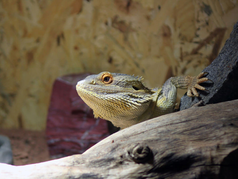 Getting Insurance for Exotic Pets