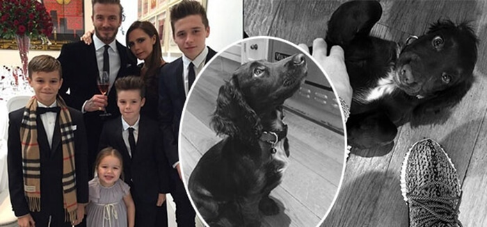 Beckham family with cocker spaniel dog, Olive