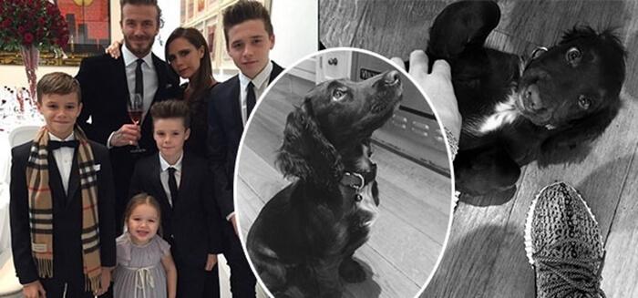 Beckham family with cocker spaniel dog, Olive