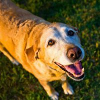 5 Common Cancers in Dogs and How to Spot the Signs