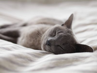 Five Deadly Cat Accidents and Their Emergency Treatments