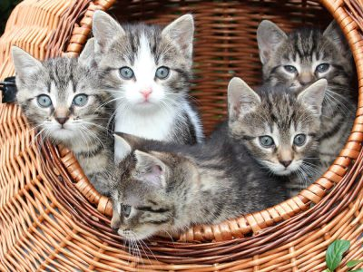 Cat Breeding Guide