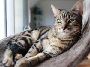 Cat-Friendly House: Keeping Your Indoor Cat Happy