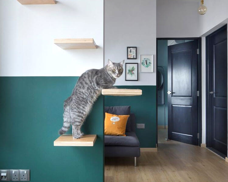 a cat friendly house