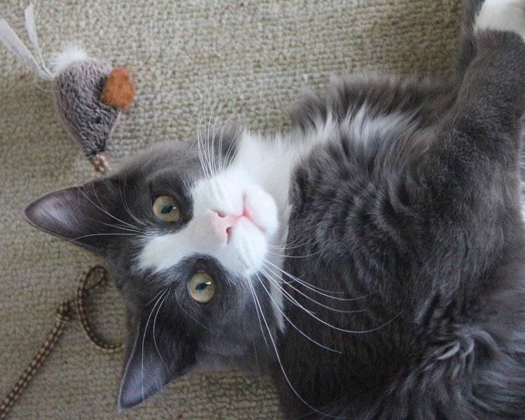 a cat playing a mouse toy