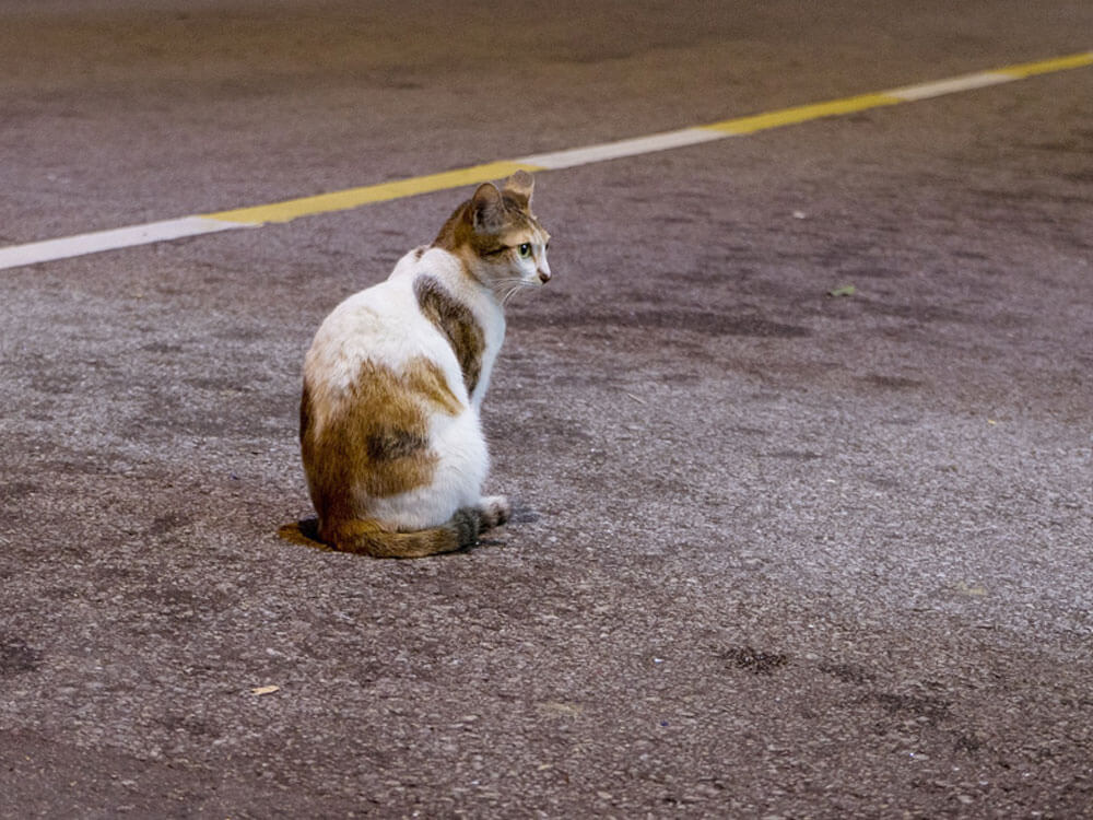 a cat sitting in the middle of a road