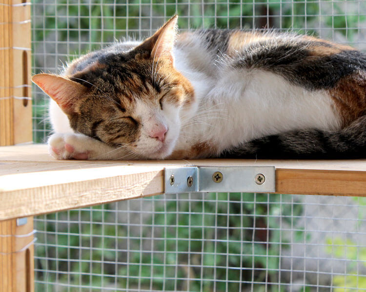 cat sleeping in a screened porch area