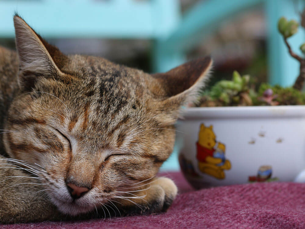 Here's Why You Have a Snoring Cat