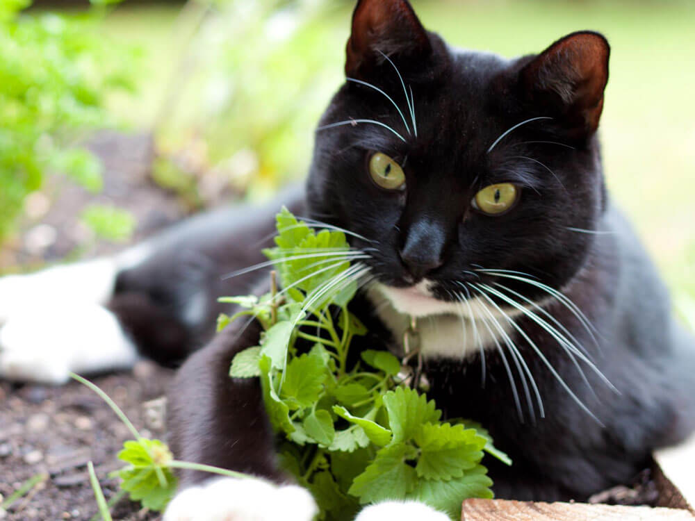 a cat with a catnip