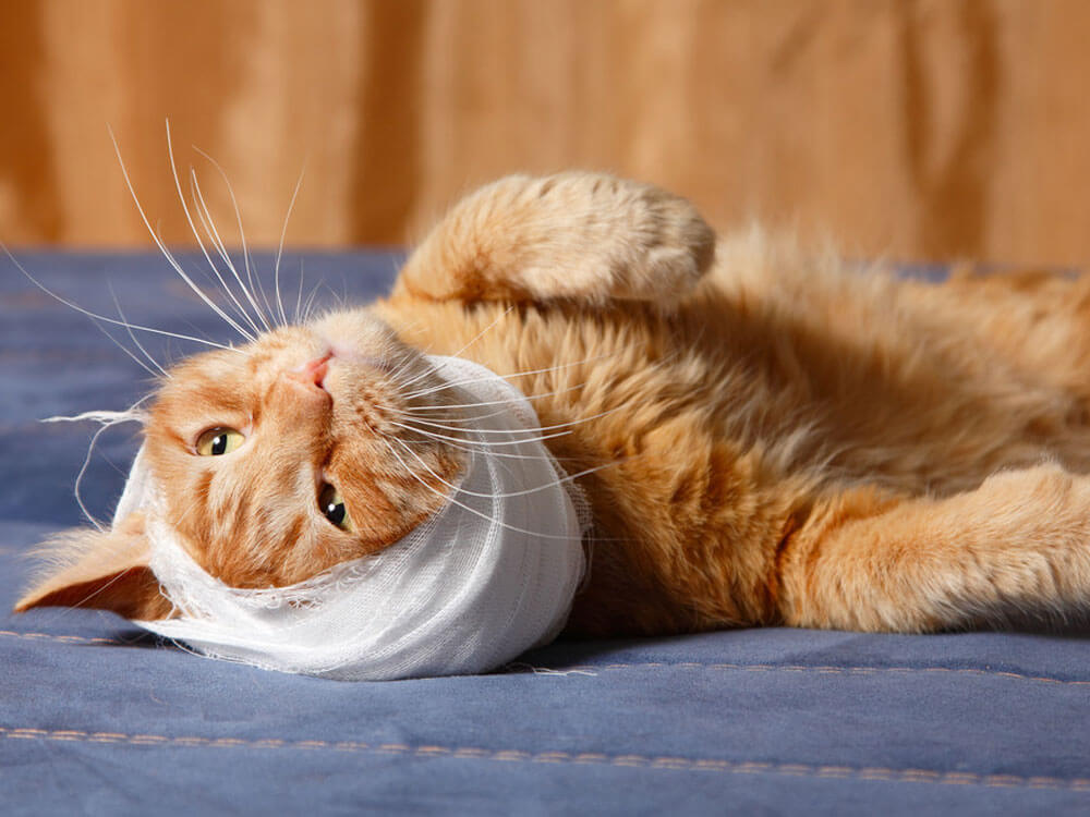 a cat's head wrapped in bandages