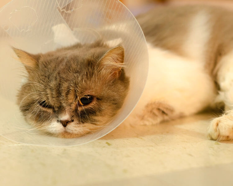 a cat with a cone collar on its neck