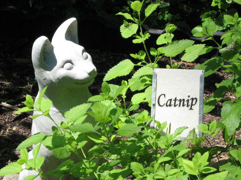 a catnip garden with a statue cat