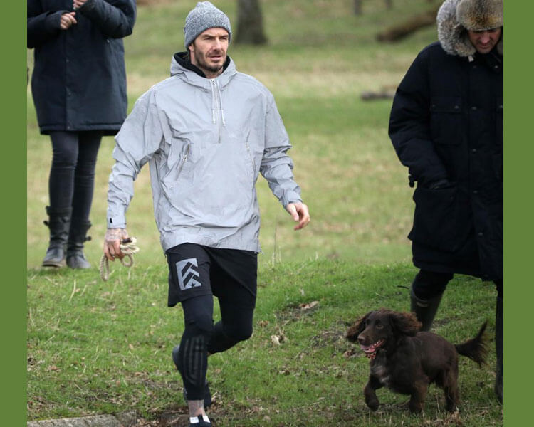 david beckham with his cocker spaniel dog, olive, walking with other people in the grass