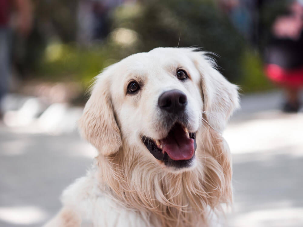 Prescription Diet for Dogs with Kidney Disease