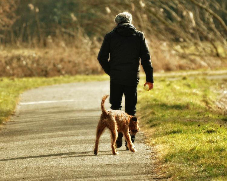 a dog and a man walking at the park