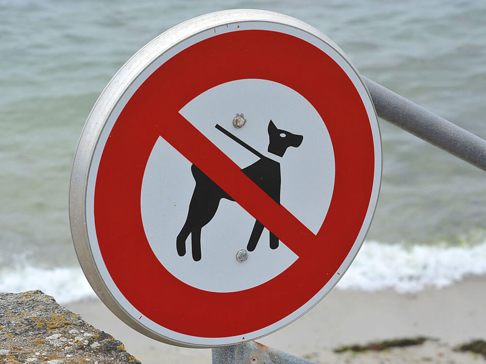 Dog Ban and Crackdown Devised by Council