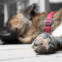 Dog Foot Corns: Causes and Treatments