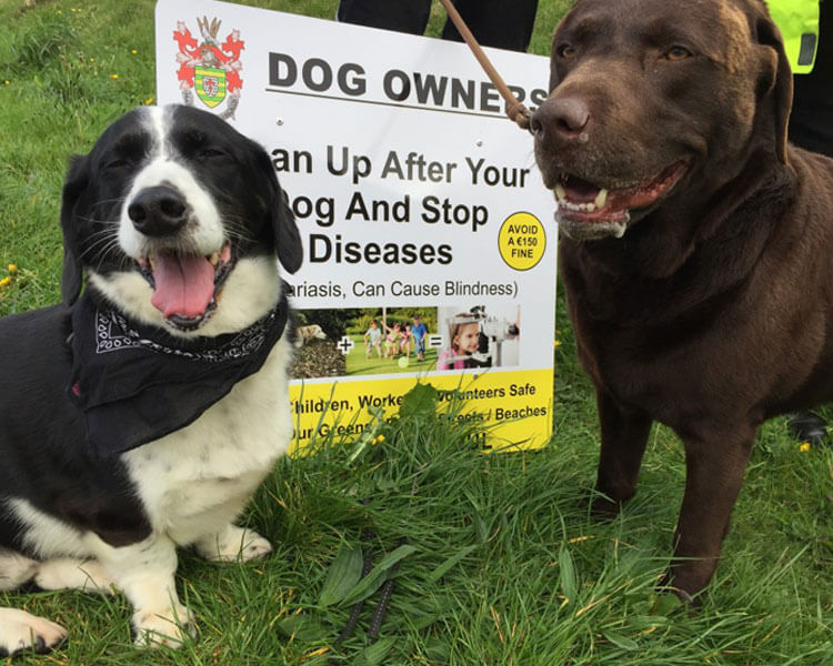 a dog fouling campaign leaded by two dogs