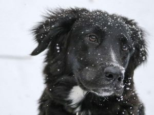 How Cold Is Too Cold For Your Dog?  -7 Ways to Keep Dogs Warm during Cold Winter