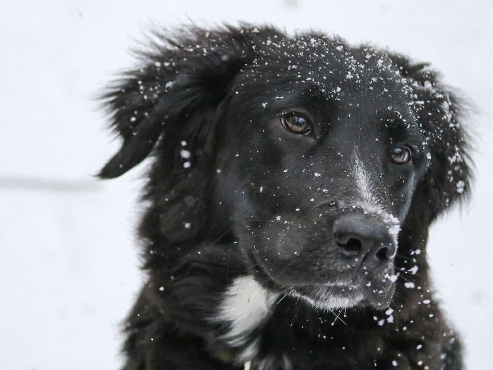 Ways to Keep Dogs Warm during Cold Winter