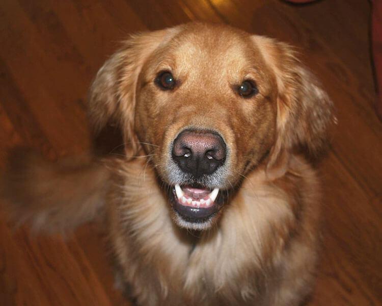 a dog showing its teeth