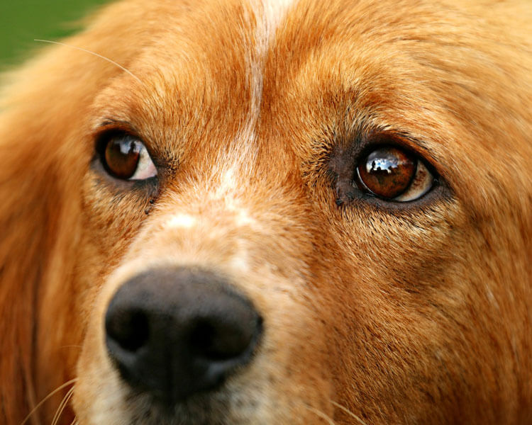 a close-up of dog's eyes