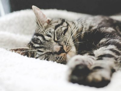 FIP in Cats: Symptoms and Treatments