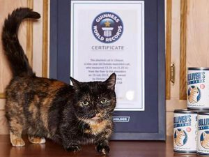 Amazing Cats with Guinness World Records