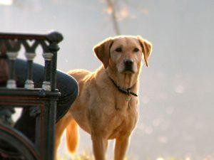 Pet Insurance for Senior Pets