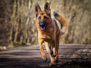 The Story of K9 Dogs